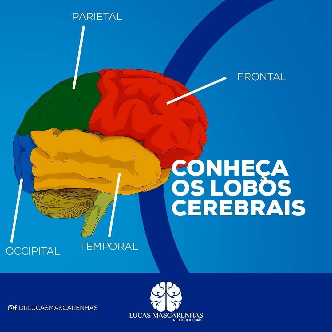 Os lóbulos cerebrais