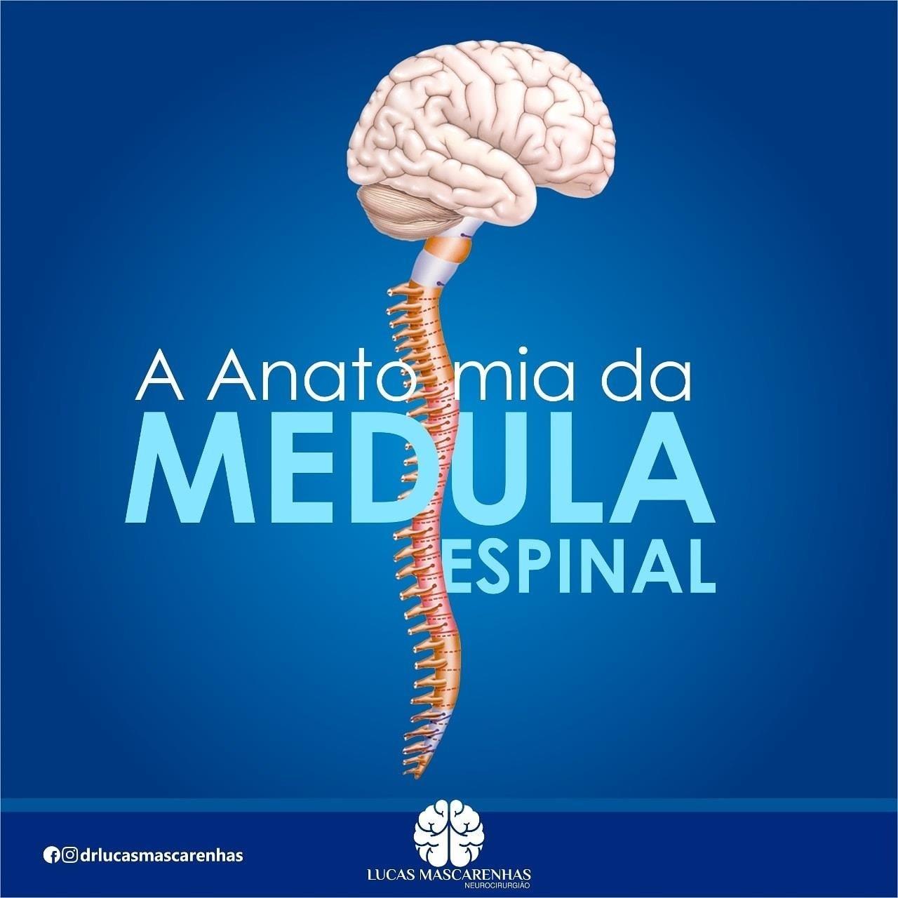 A anatomia da medula espinhal.